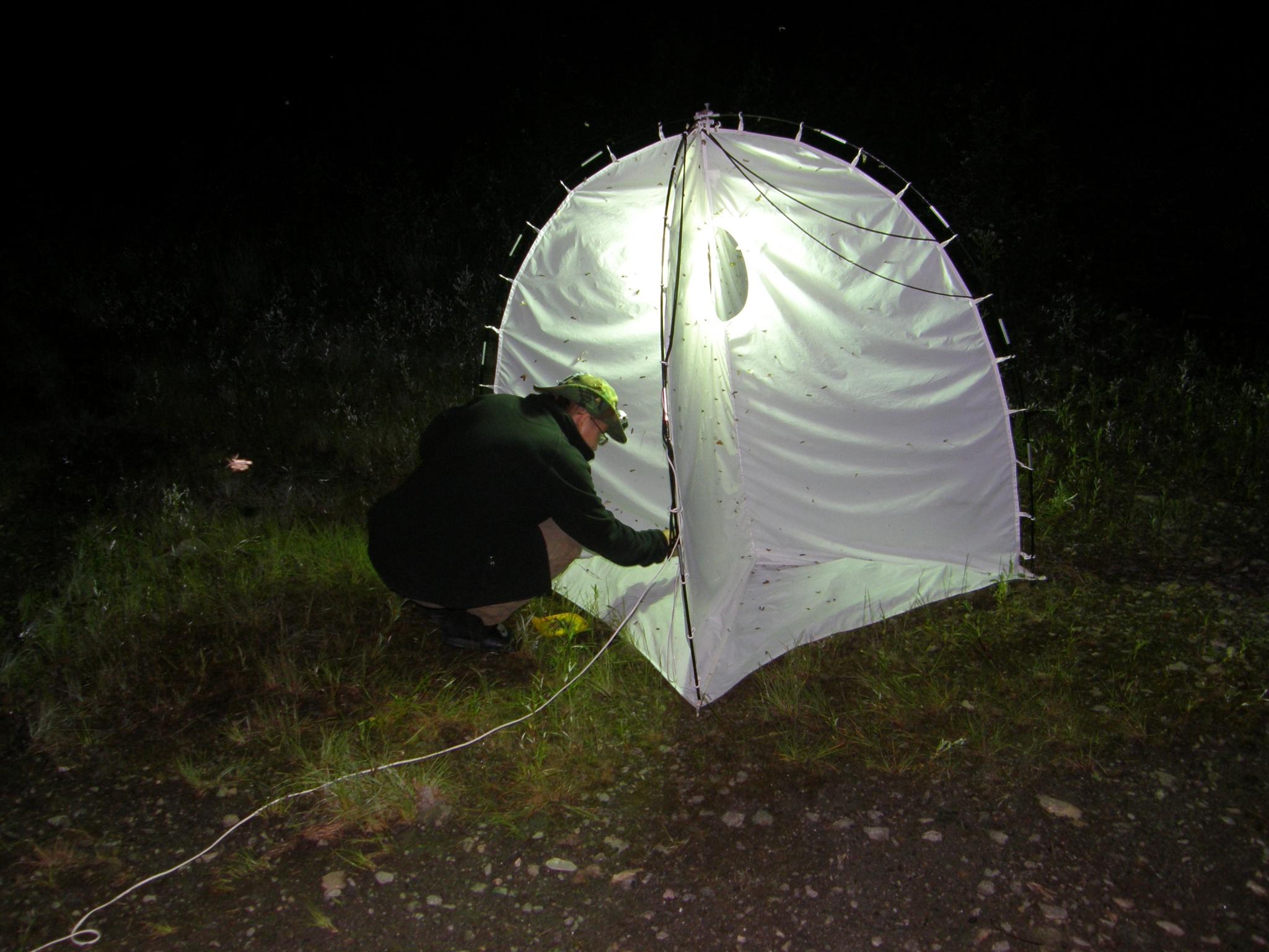 Старший научный сотрудник, энтомолог Е.С.Кошкин за ловлей ночных насекомых