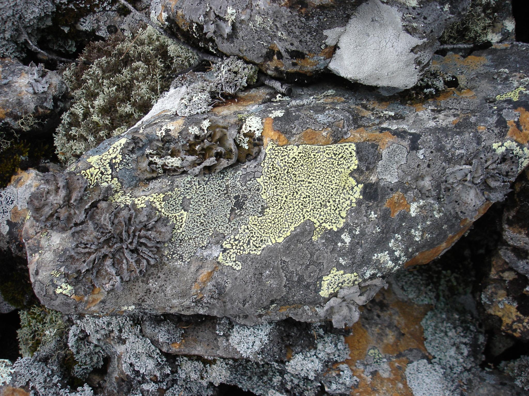 Природная мозаика (лишайники)